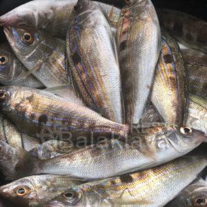 рыбалка-в-балаклаве-катер