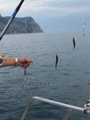 на-катере-рыбалка-в-крыму